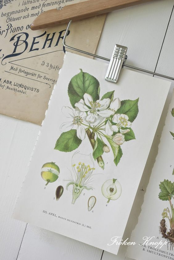 Farmhouse style botanical prints and how to display them! Budget-friendly and free botanical prints round-up!