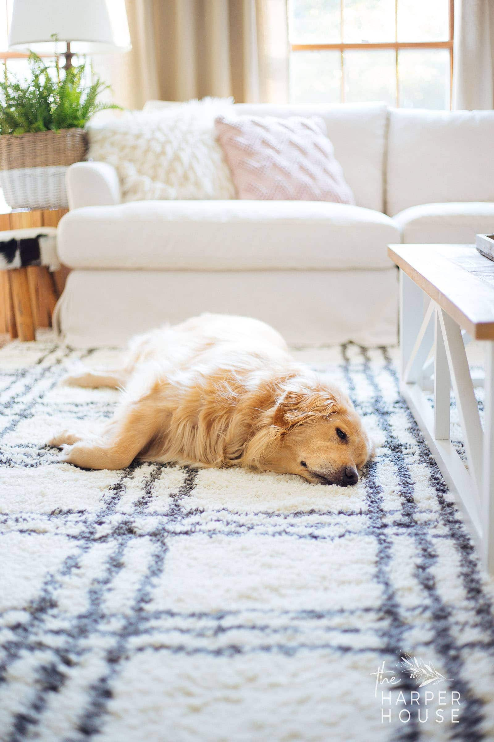 golden retriever dog laying on black and white rug