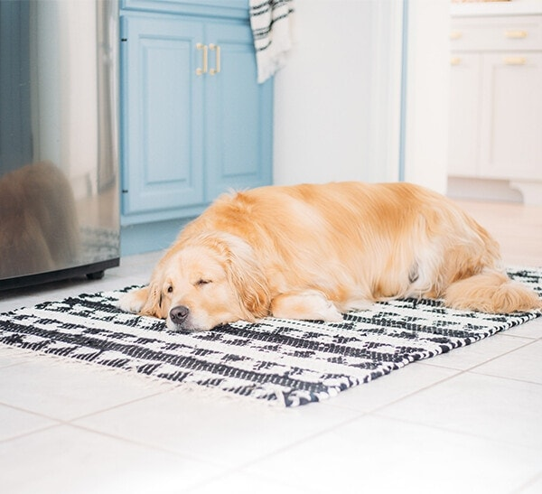 golden retriever on rug