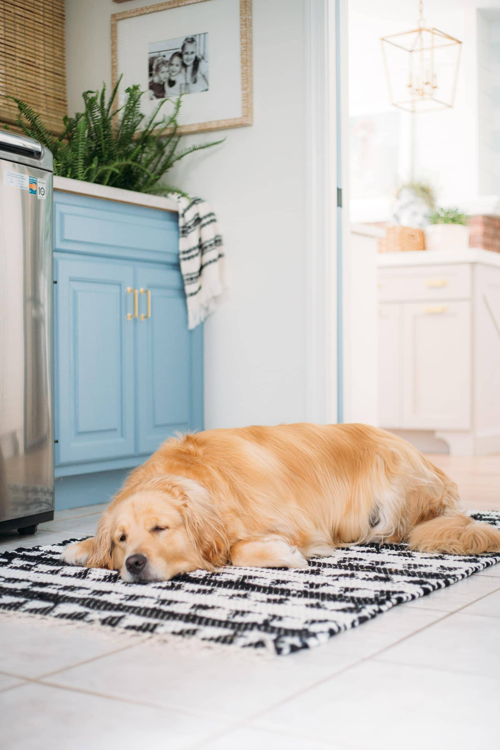 golden retriever in laundry room