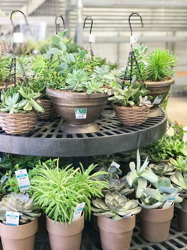 walmart garden center - succulents, hanging plants, and more