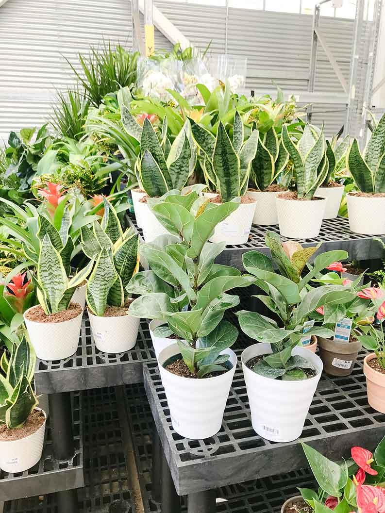 walmart garden center plants