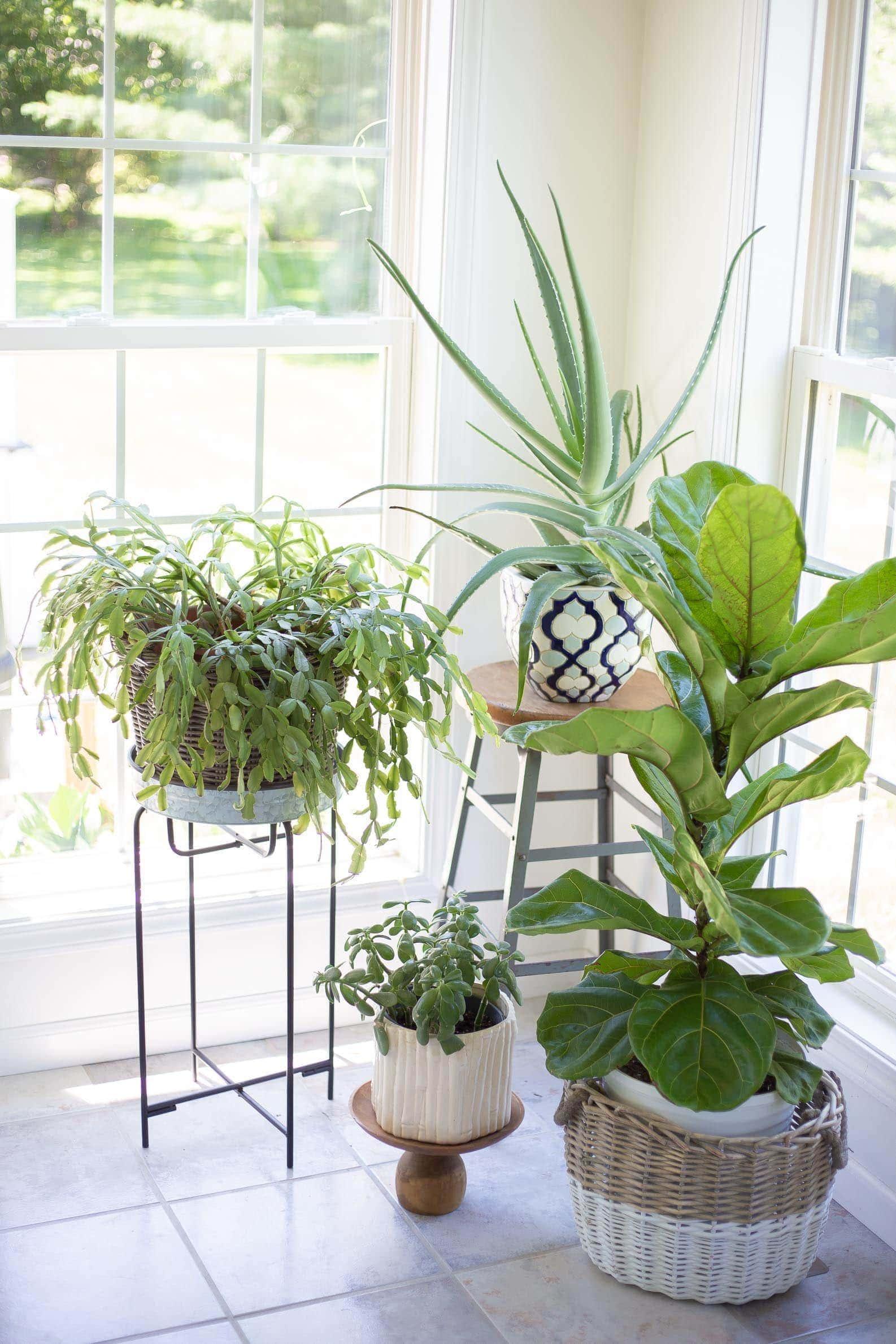 benefits of indoor plants in home office space